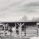 Cees Slootwijk op El Paso ranch